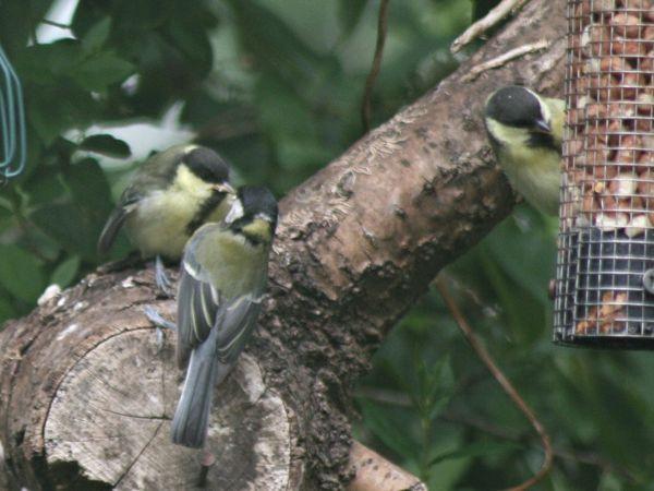 Feeding the birds in Ellesmere