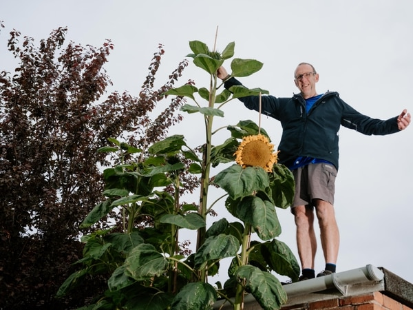 Bryan's super sunflower reaches for the sky