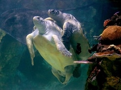 In Video: Turtles reunited after eight months apart