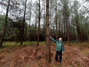 Forester Doug Stanley at a forest in Cannock Chase