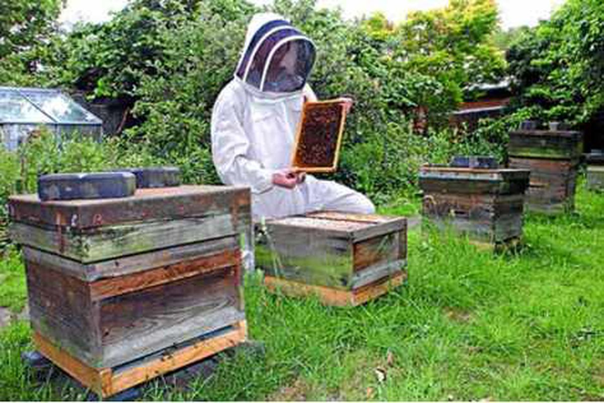 Meet Tom, the 16-year-old Shropshire beekeeper