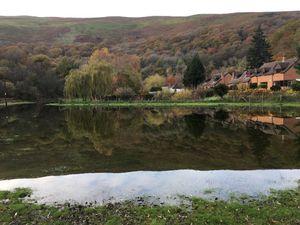 Cudwell Meadow near Church Stretton