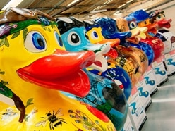 Charity calendar based on Telford's Let's Go Quackers art trail to be released