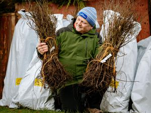 Rob McBride with some of the oak saplings