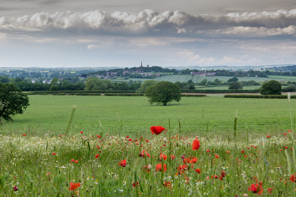Rob Hall's shot towards Lilleshall over wheat and poppies