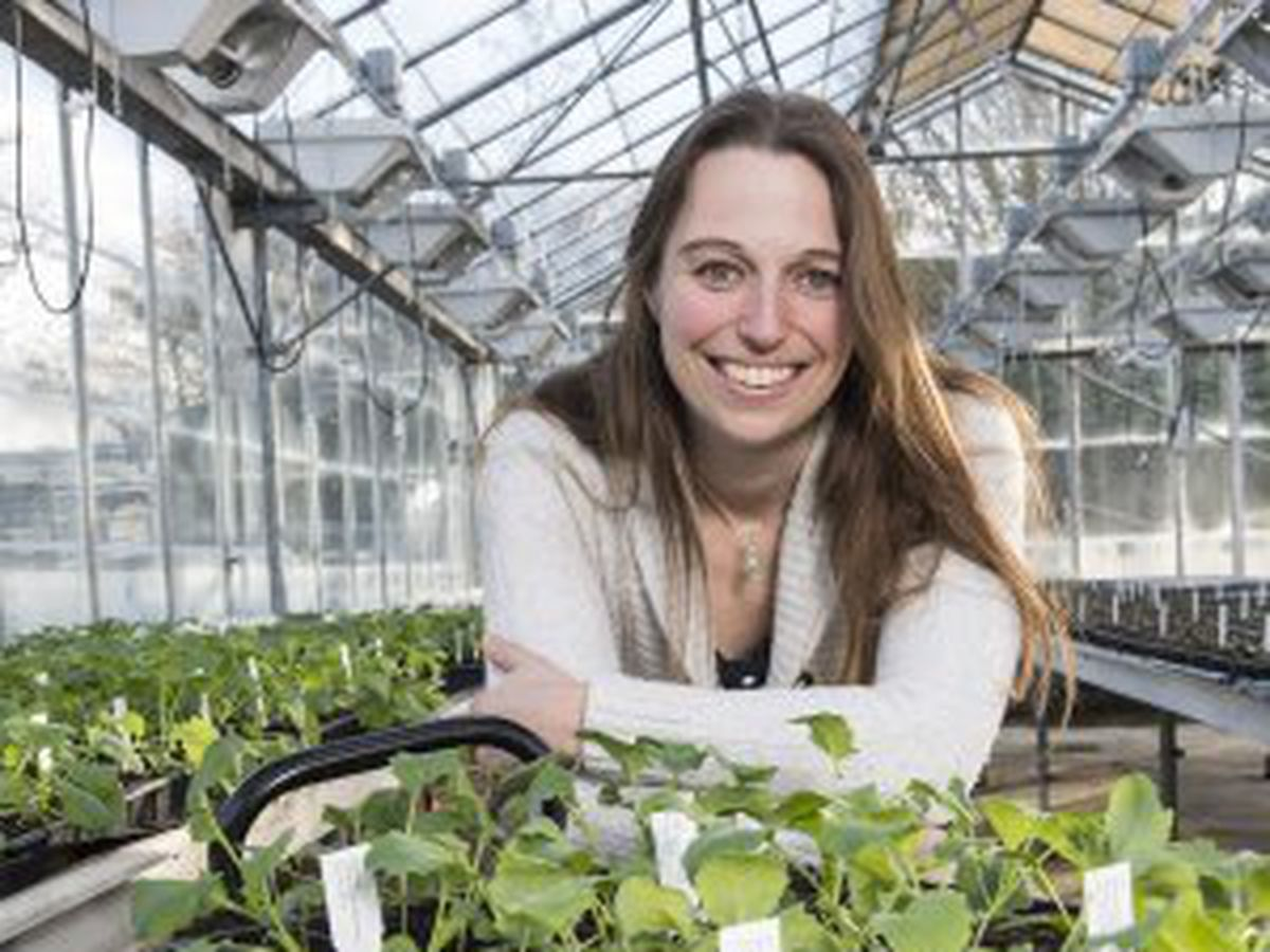 Dr Rachel Wells is the project manager for the BBSRC SLoLa Brassica and Rapeseed And Vegetable Optimisation (BRAVO) project.