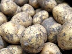 Dozens of jobs under threat as Telford potato firm plans closure