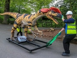 In Pictures: Giant animatronic predators arrive at Chester Zoo