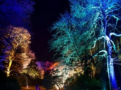 Illuminated trails and winter walks this festive season at Weston Park