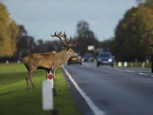 Don't veer for deer