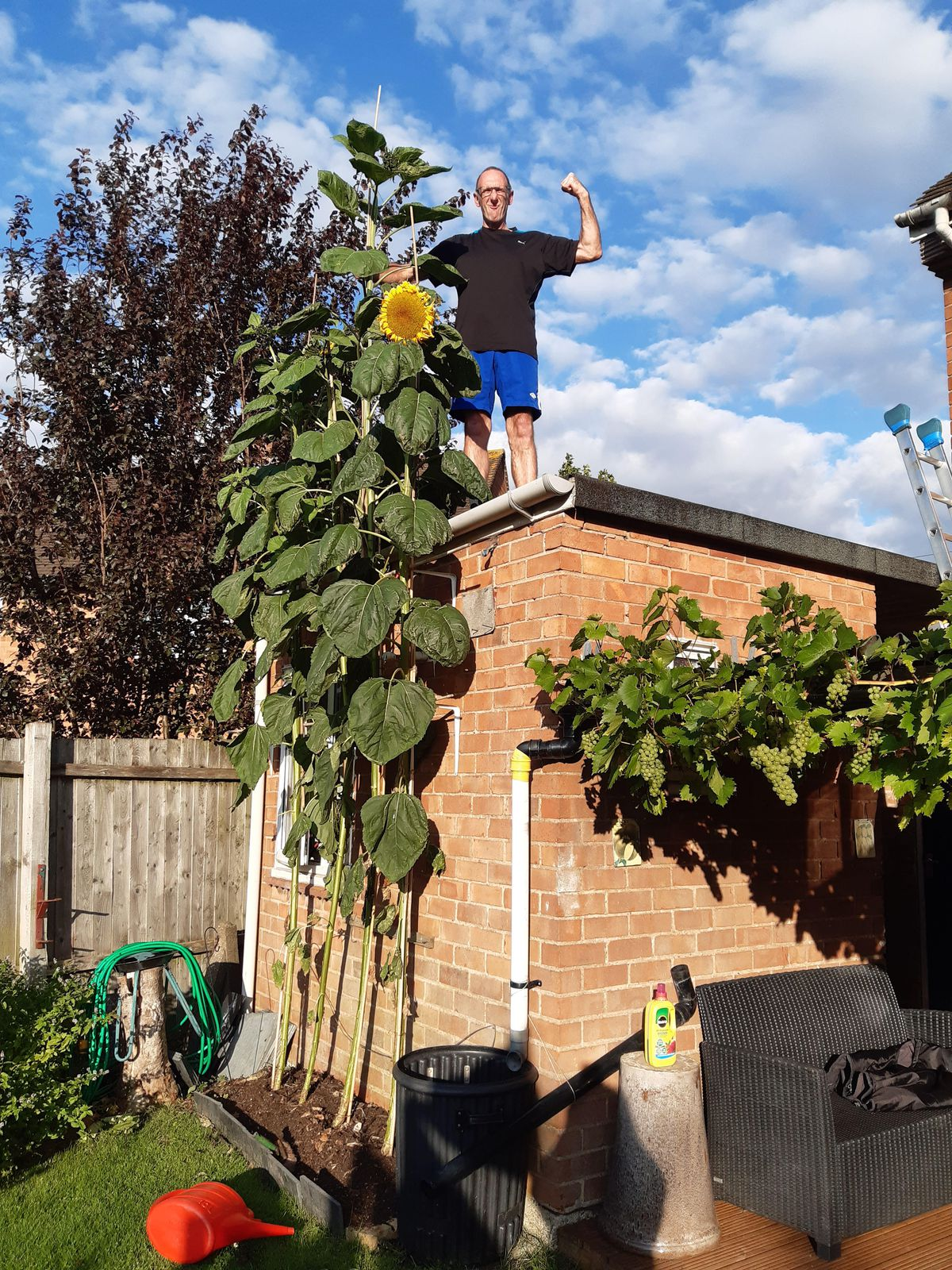 Bryan with his 14 feet tall Sunflower