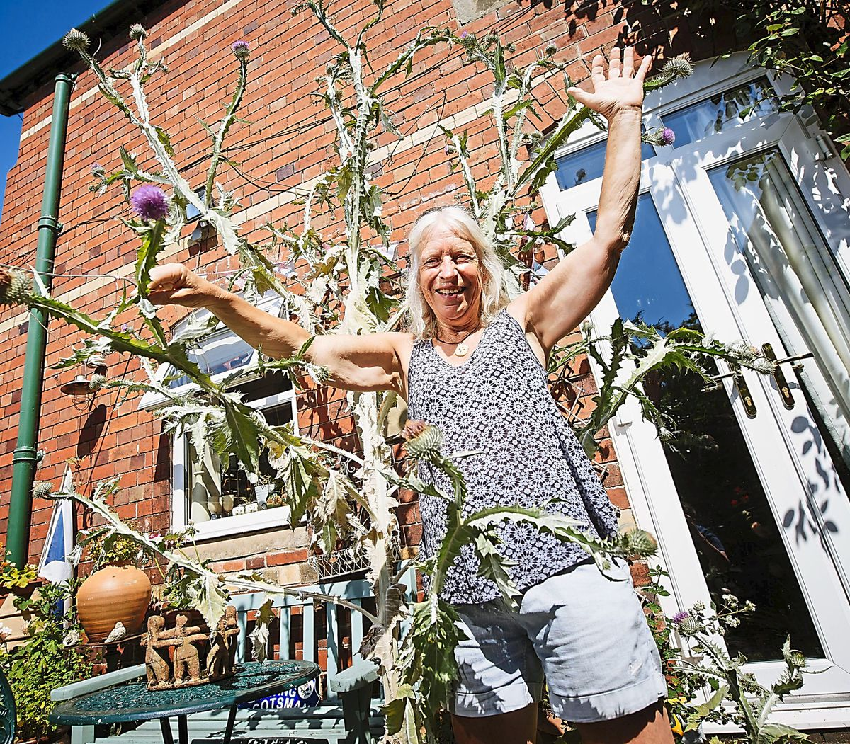 LAST COPYRIGHT SHROPSHIRE STAR JAMIE RICKETTS 19/07/2021 - Jade Paton from Newport, Shropshire has a 10ft Thistle in her back garden!.