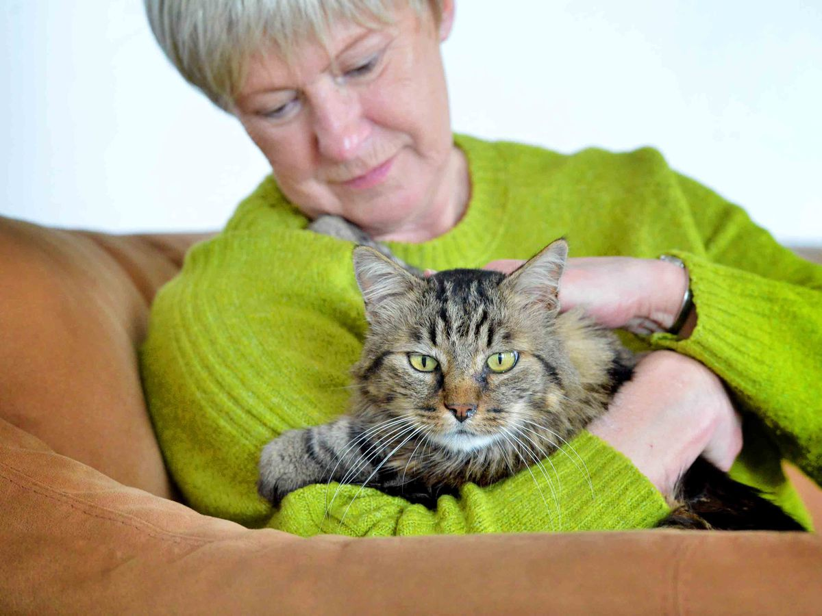 Ludlow owners shocked as cat Oscar found with 45 shotgun pellets scattered all over his body