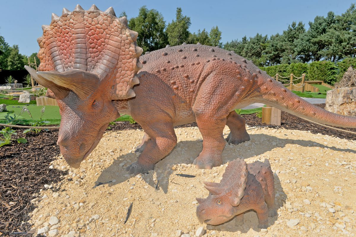 The crazy golf course's resident triceratops and baby