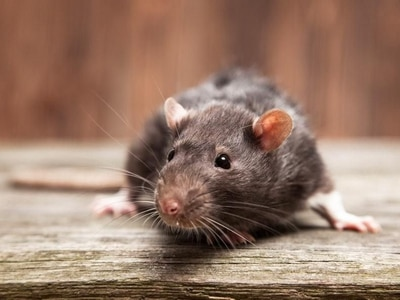 Shop near Shrewsbury reopens after rodent infestation