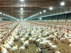 Decision on proposed chicken farm delayed