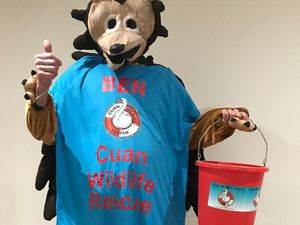 Ben is running in a hedghog costume for Cuan Wildlife Rescue