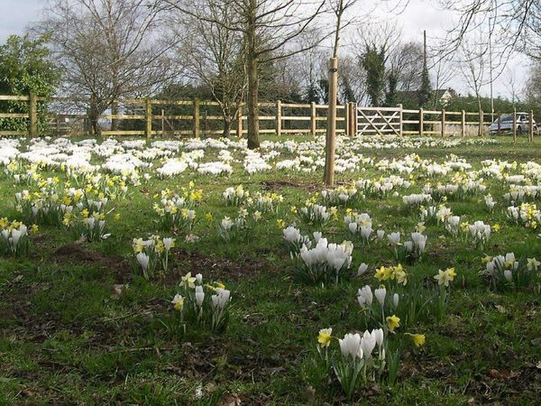 The bulb flowers adorn Hutchison's Way
