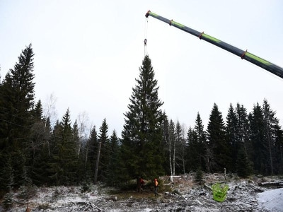 Trafalgar Square to receive 'very symbolic' Christmas tree from Norway