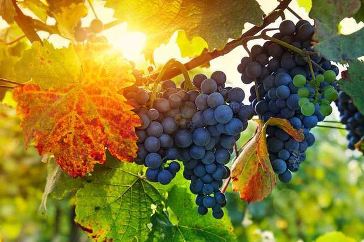 English Wine Week taking place from May 28 to June 5