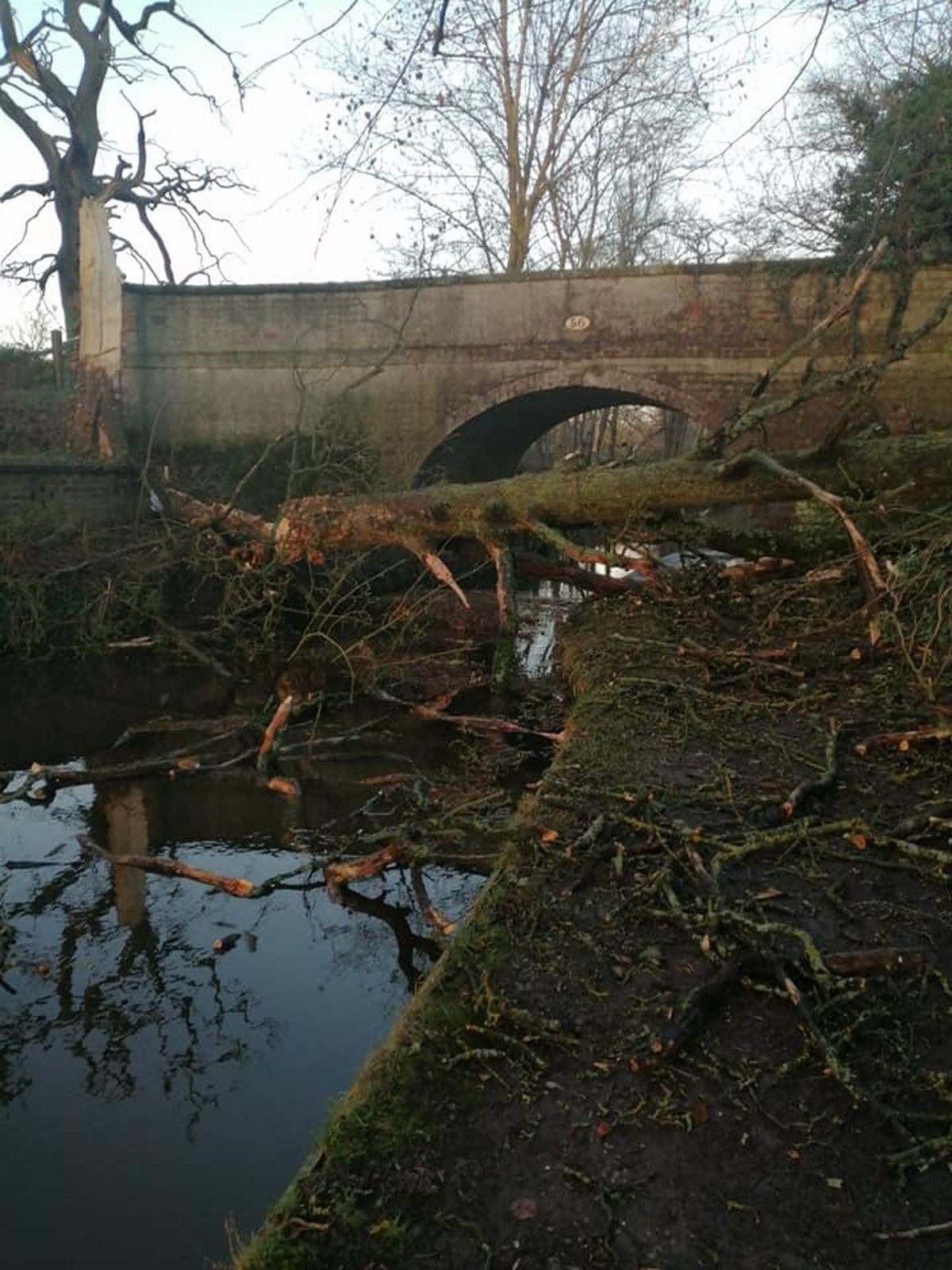 The tree that fell on the canal near Ellesmere. Photo: John Mooney