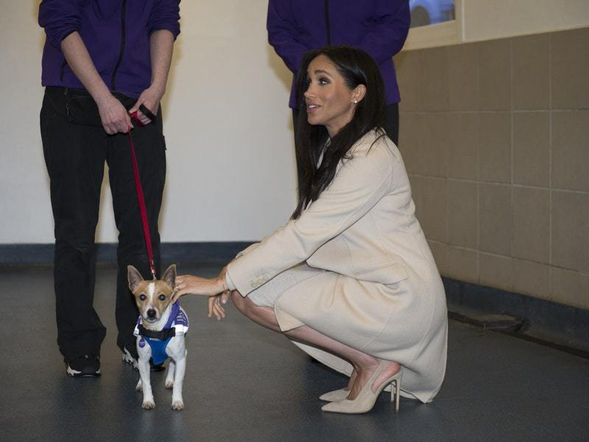 The Duchess of Sussex during a visit to Mayhew in January 2019