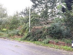 Storm Callum: Trees down and trains cancelled as Shropshire and Mid Wales take a battering