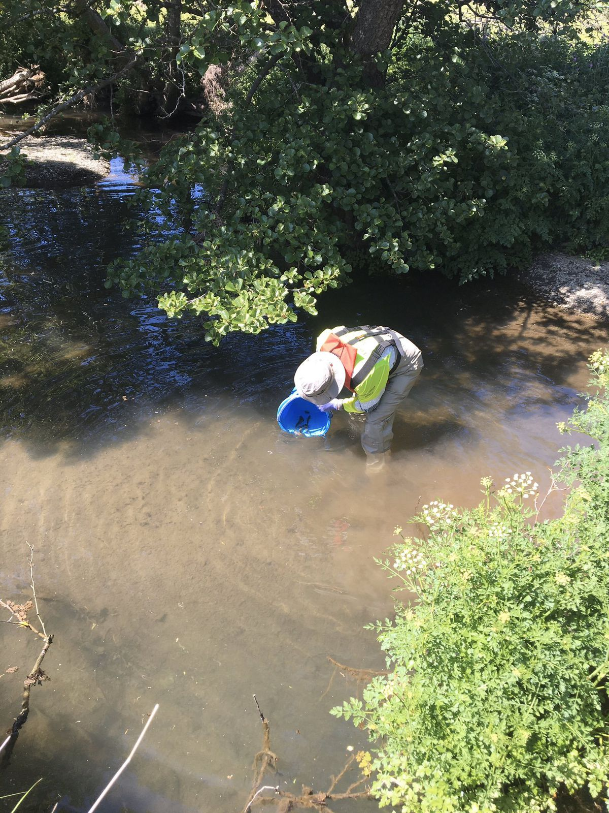 A worker rescues fish from the river. Picture: Dave Throup