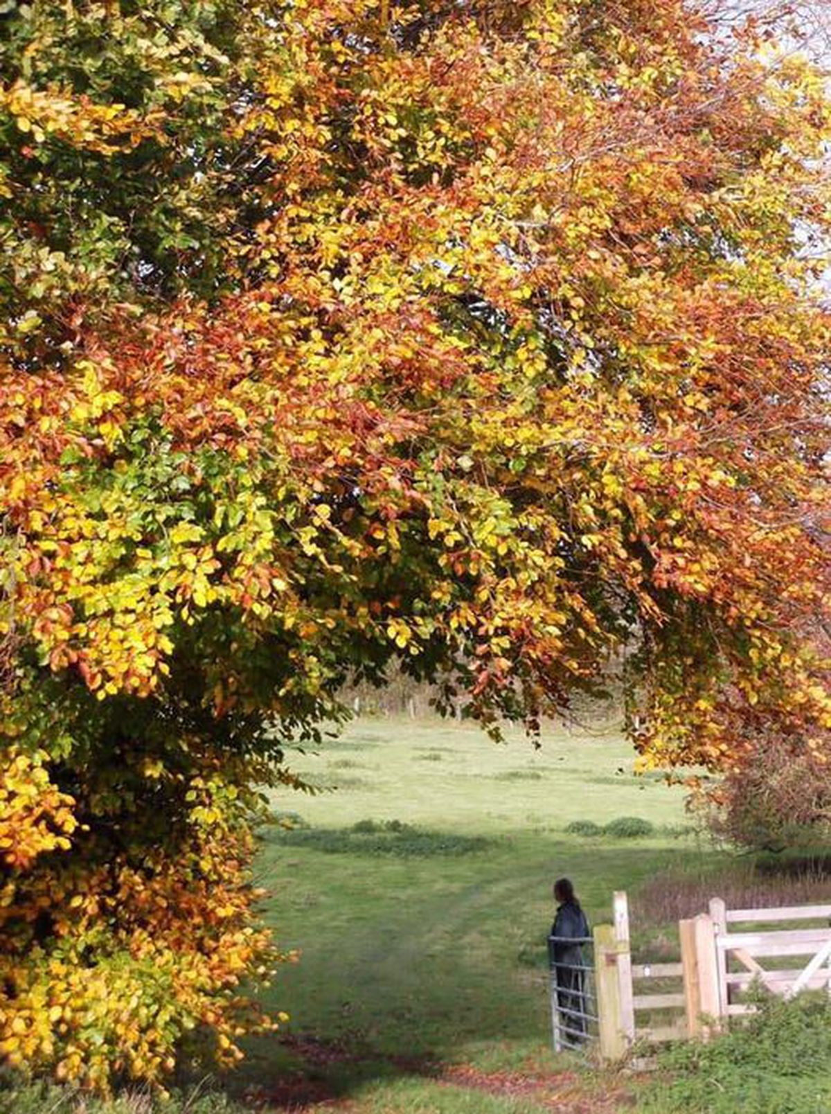 Stunning autumn scene near Trefonen captured on her camera by Ruth Dawes