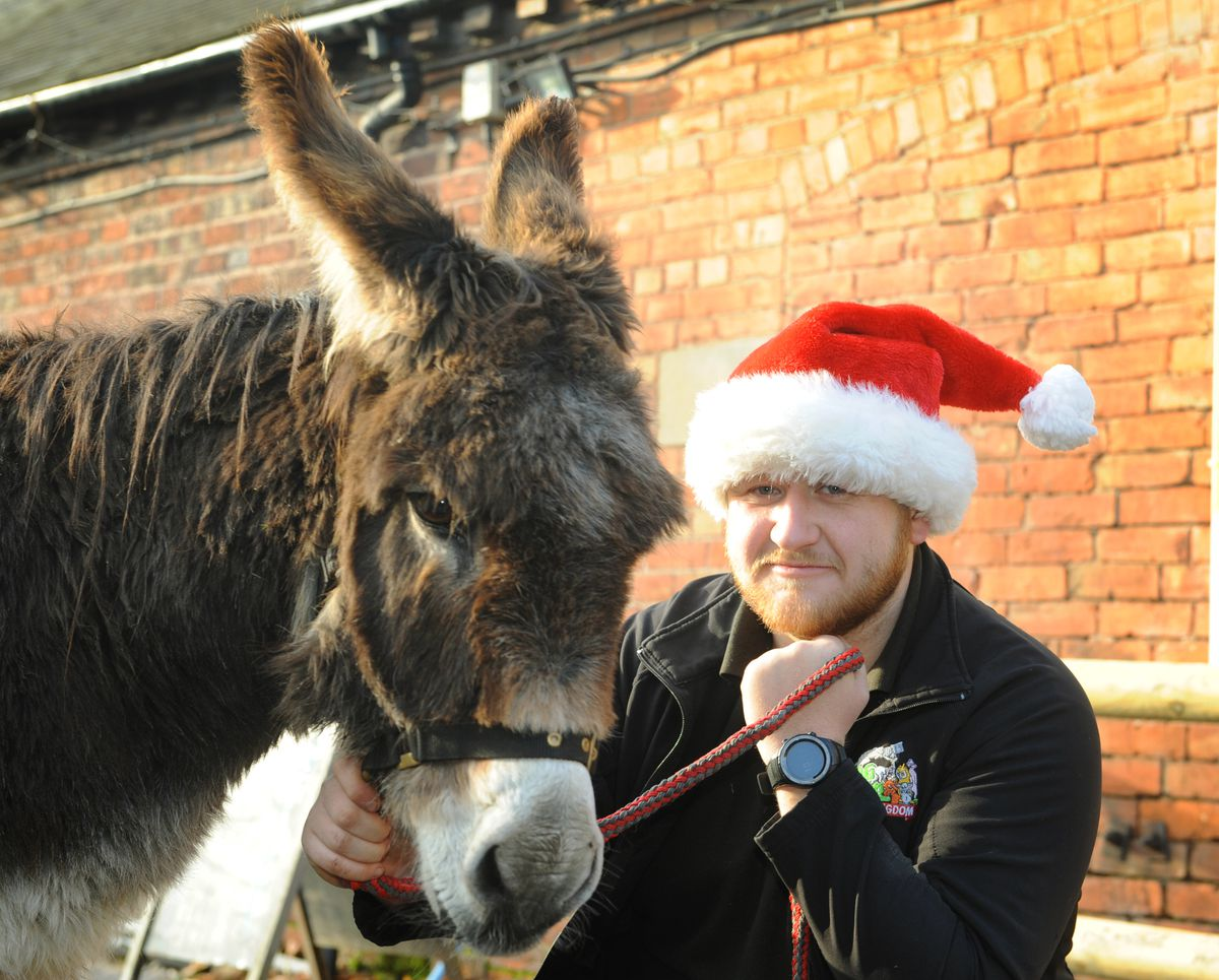'Whisper' the donkey, with keeper Ieuan Howells at Hoo Farm Animal Kingdom, which has had to cancel its popular Christmas event and is now planning for the future