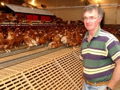 Eggs scandal: Don't panic, ours are safe, say Shropshire farmers
