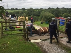 Horse trapped in cattle grid near Ellesmere cut free - with pictures