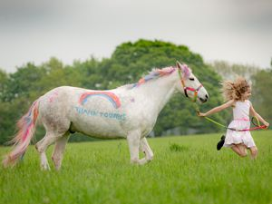 Amber Price, 8, of Bridgnorth, with her New Forest Pony, Bear, who has been painted with a thank you to the NHS using special pony paint. Photo: Peter Lopeman