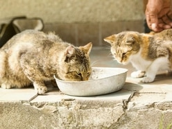 This note sets out exactly why you should not feed stray cats