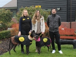 Dog lover takes on challenge of a lifetime to help rescue dogs