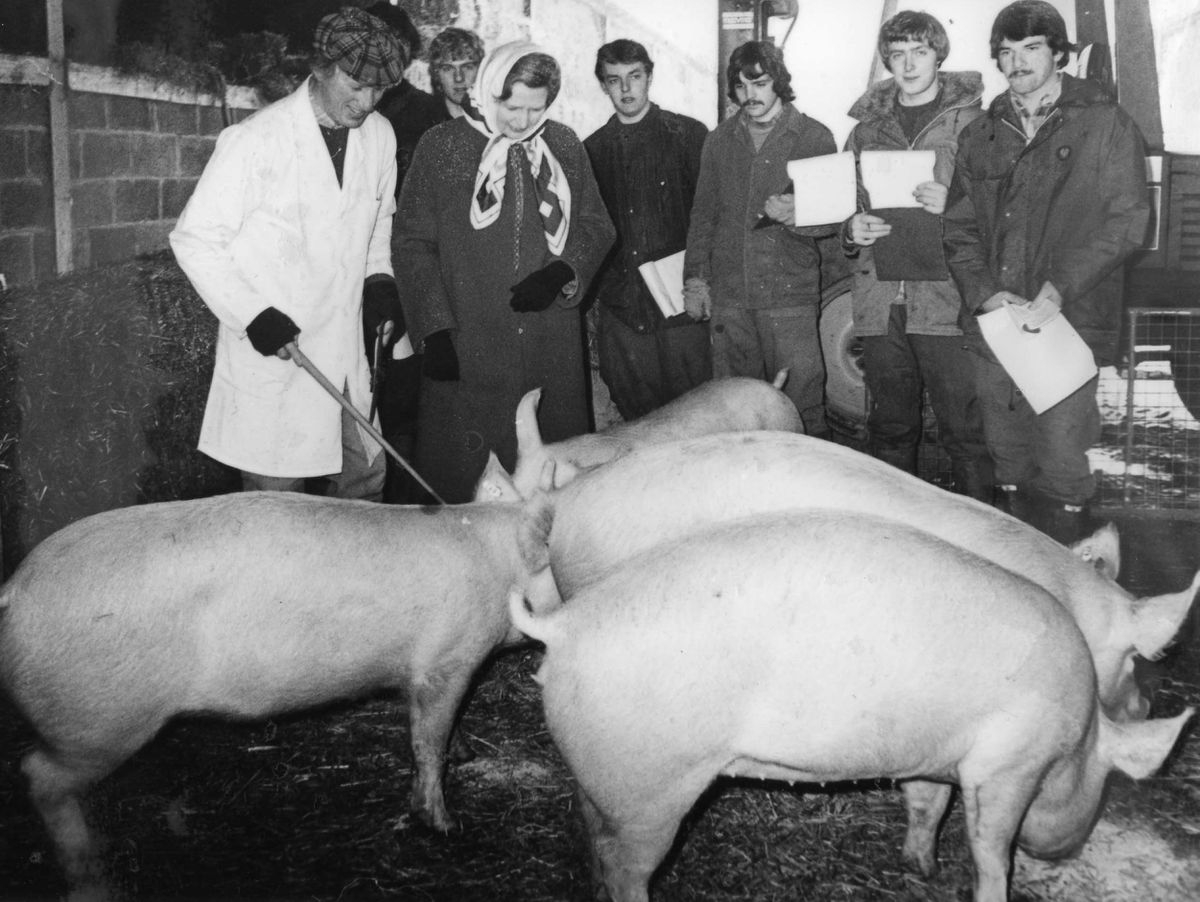 Admiring the pigs during a December 1981 visit to Walford College, near Baschurch, Shropshire