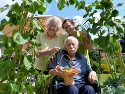 Veg garden a delicious delight at Shropshire nursing home