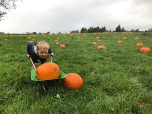 People can pick up their own pumpkins at Fordhall Farm