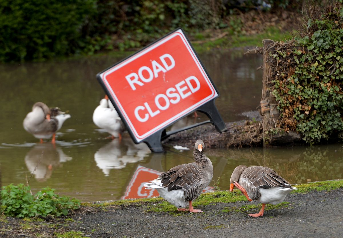 Geese consider the advice in Bridgnorth