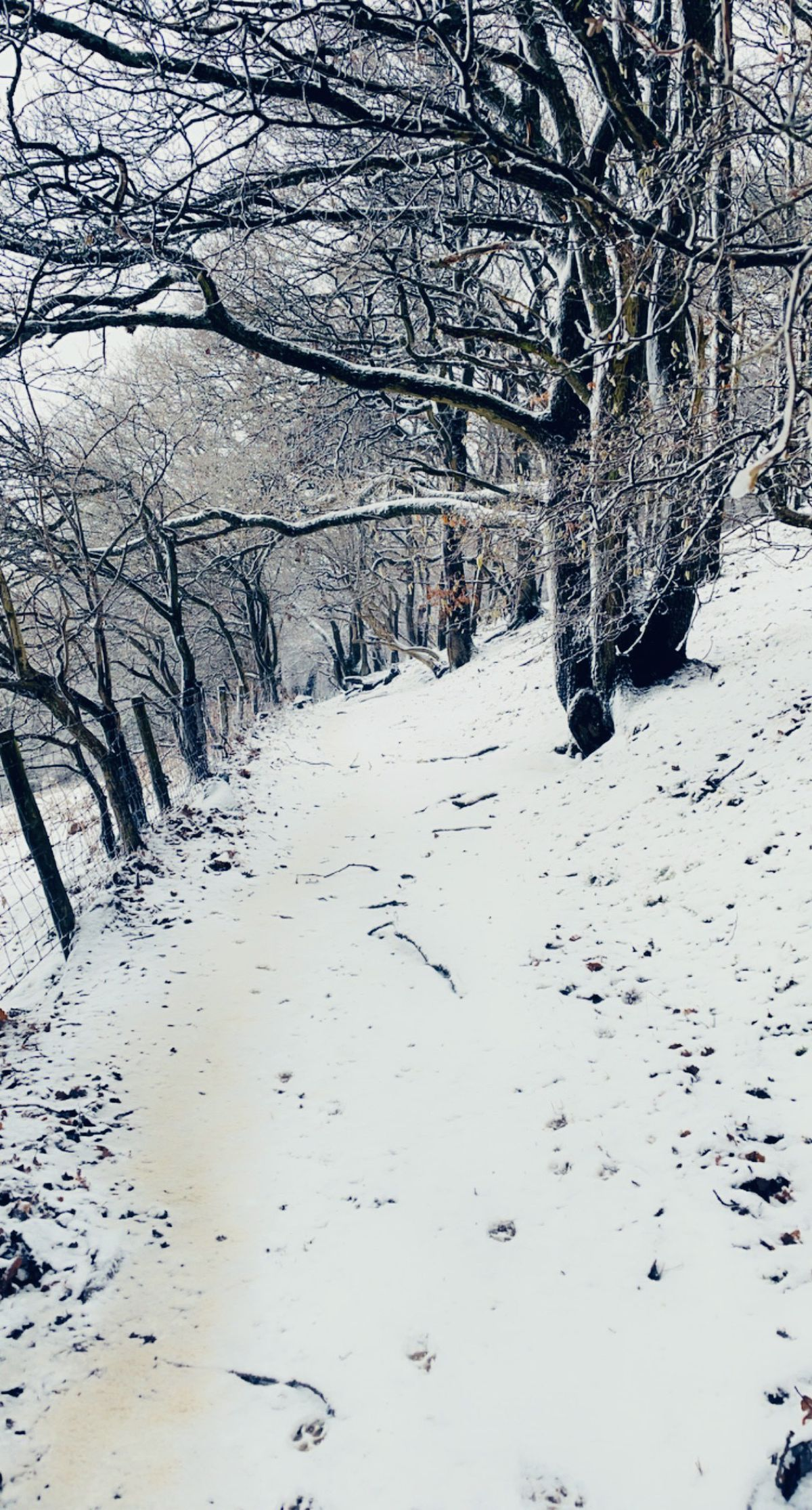 Snowy scenes from the Long Mynd in Church Stretton. Pic: Julie Powell