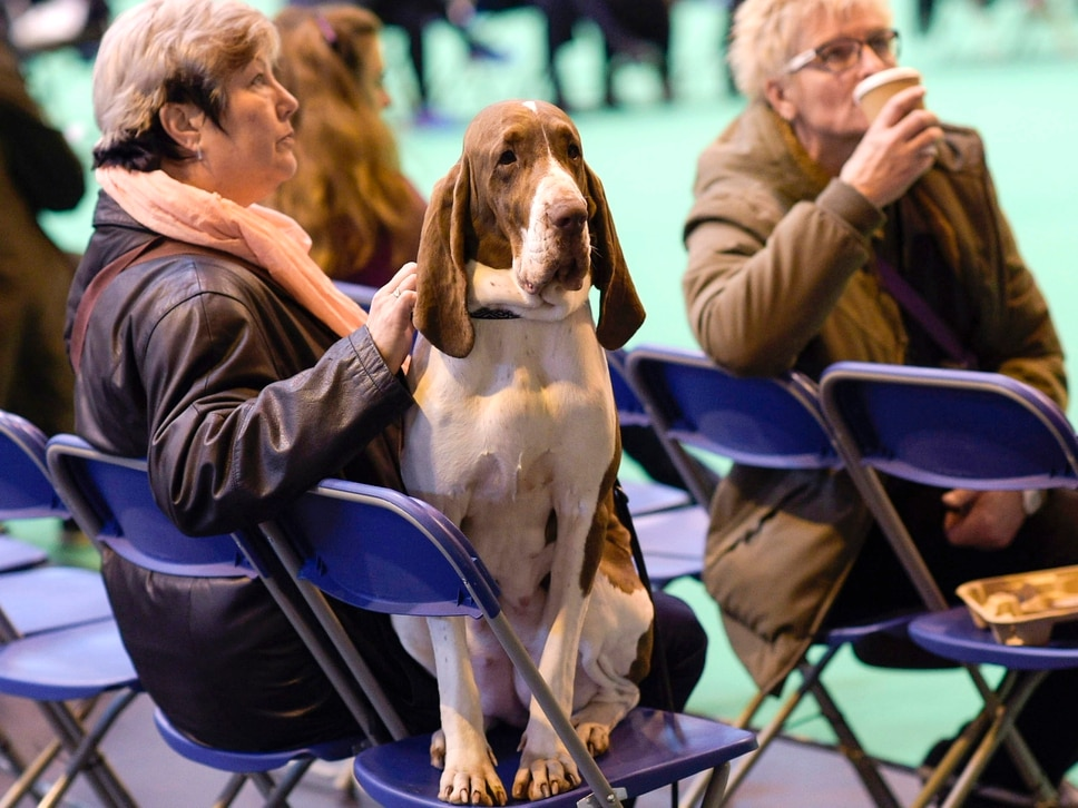 Crufts 2018: 10 barking mad facts about the Birmingham event