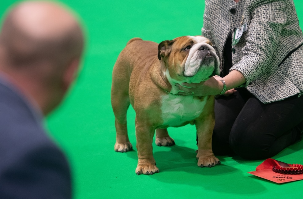 Crufts 2020 Highlights From Day One At Birmingham Nec With