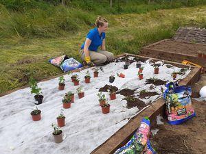 Severn B-lines intern Kaitlyn planting a pollinator garden.