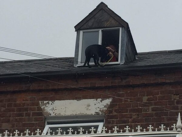 Firefighters rescue Labrador from roof of Telford home