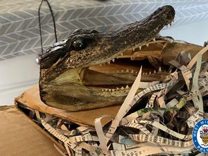 A close-up of one of the alligator heads