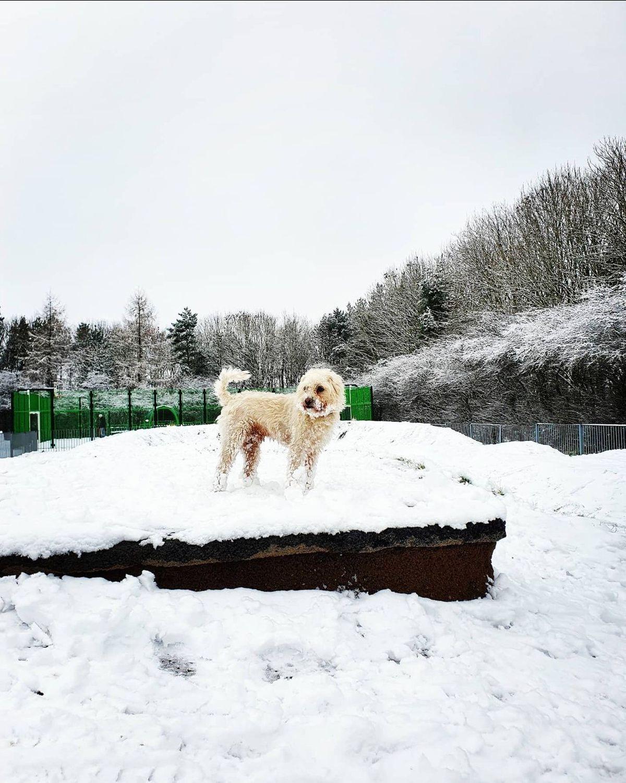 Snow in Lawley. Photo: Laura Cunningham