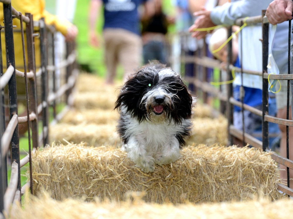 Ludlow Dog Day cancelled