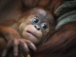 Chester Zoo is home to a record 35 thousand animals