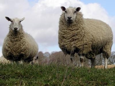 Shepherds' huts tourism plan for farm near Oswestry