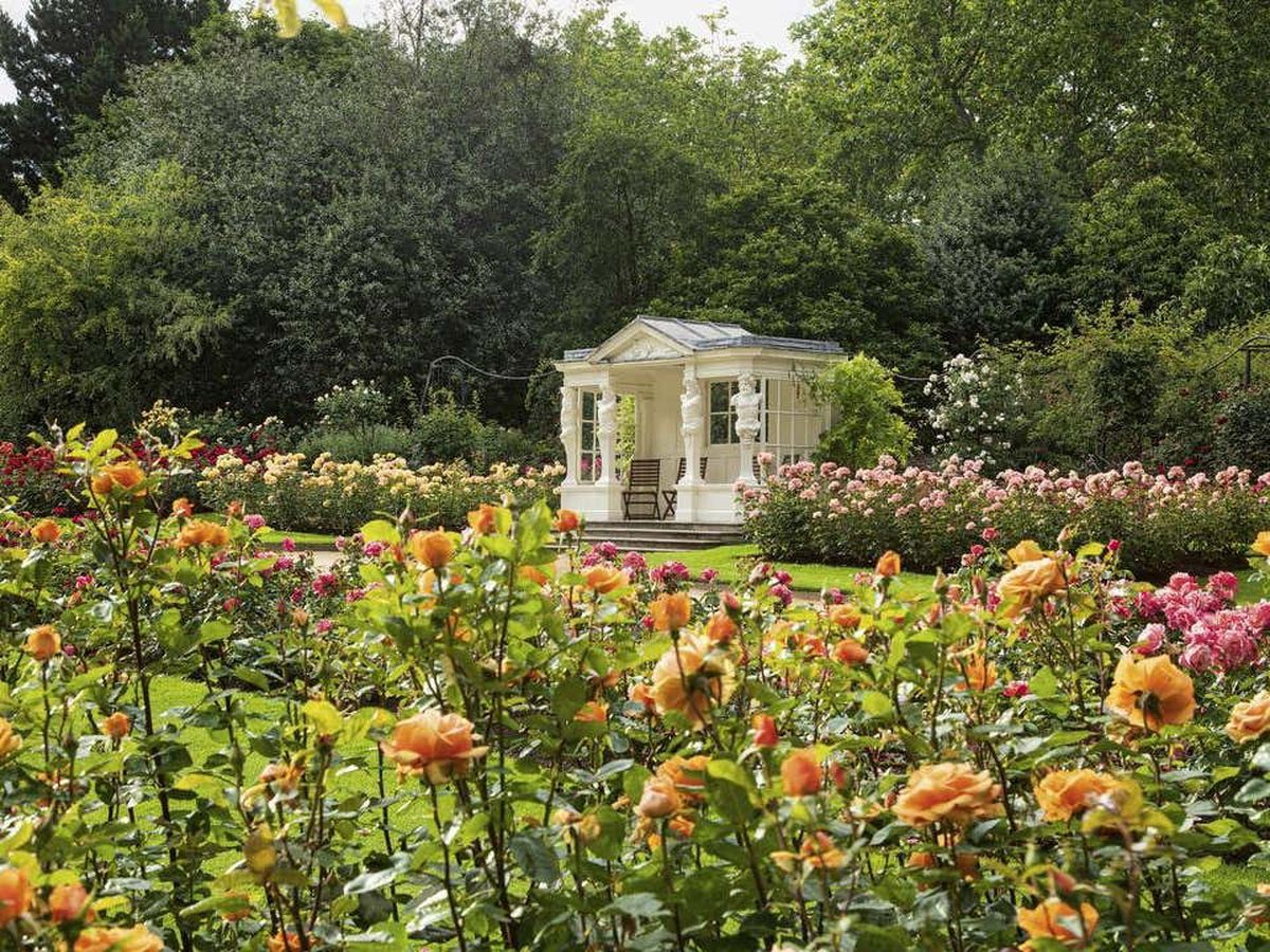 The Rose Garden at Buckingham Palace